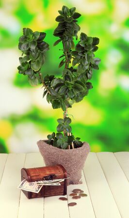 pot of money: Money tree with money on wooden table on natural background Stock Photo