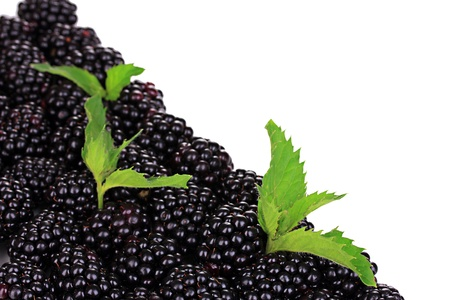 Sweet blackberry isolated on white photo