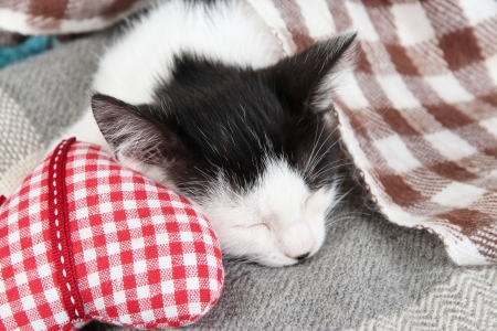 Sleeping kitten on blanket Stock Photo - 20998136