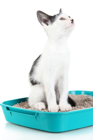 Small kitten in blue plastic litter cat isolated on white photo