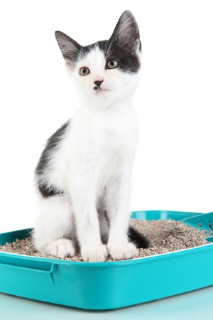 Petit chaton en bleu litière chat en plastique isolé sur blanc