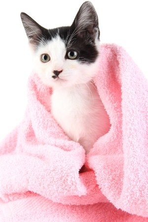 pink pussy: Small kitten in pink towel isolated on white Stock Photo