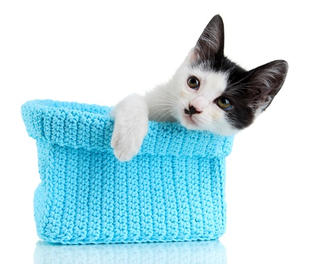 pink pussy: Small kitten in blue knitting basket isolated on white