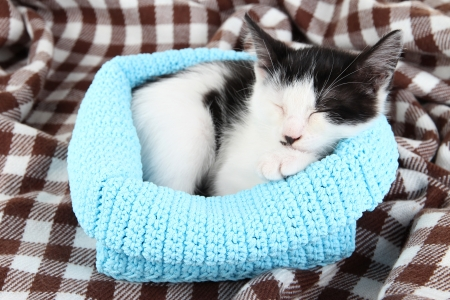 Small kitten in blue knitting basket on soft plaid Stock Photo - 21003375