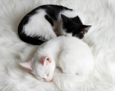 Two sleeping little kitten on white carpet photo