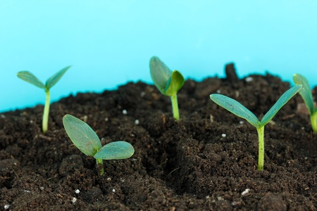 Green seedling growing from soil on bright background photo