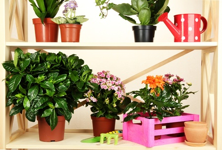 Beautiful flowers in pots on wooden shelves on room photo