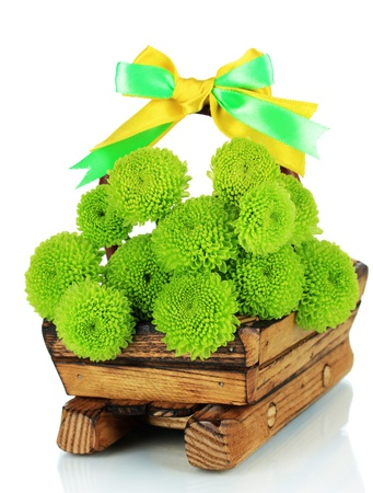 Beautiful green chrysanthemum in wooden basket isolated on white photo