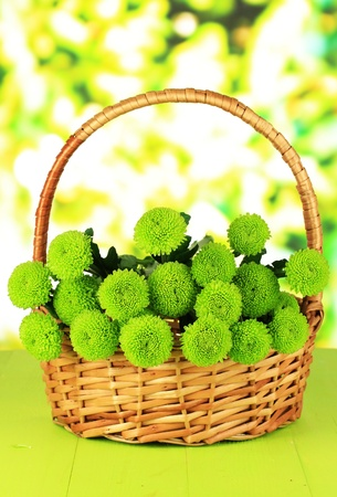 Beautiful green chrysanthemum in wicker basket on table on bright background photo