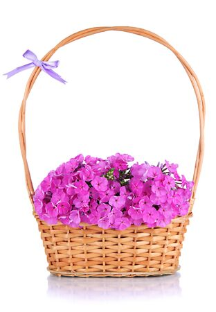 Beautiful bouquet of phlox in wicker basket isolated on white photo
