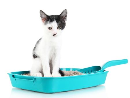 Small kitten in blue plastic litter cat isolated on white Reklamní fotografie