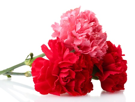 Bouquet of carnations isolated on white
