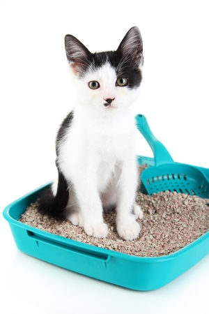 Small kitten in blue plastic litter cat isolated on white Reklamní fotografie
