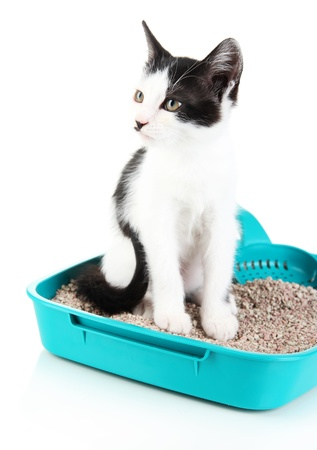 Small kitten in blue plastic litter cat isolated on white Stock Photo