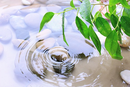 welfare plant: Green leaves with reflection in water
