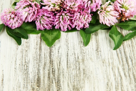 Clover flowers on wooden background Stock Photo - 21342829