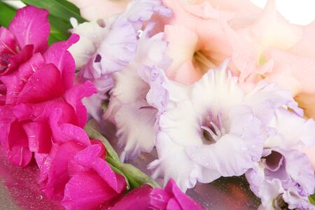 Beautiful gladiolus flower close up photo