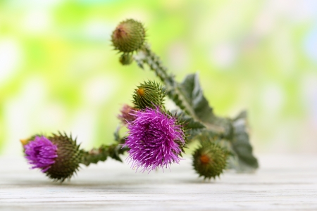Thistle flowers on nature background photo