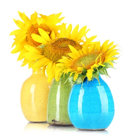 Beautiful sunflowers in color vases, isolated on white photo