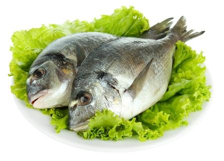 fish selling: Dorado fish isolated on white