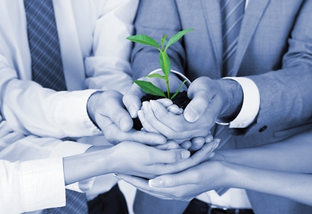 Business team holding together fresh green sprout closeup photo