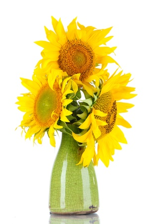 Beautiful sunflowers in color vase, isolated on white photo