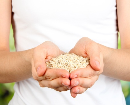 Wheat grain in female hands on natural background photo