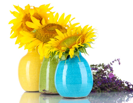 Beautiful sunflowers in color vases and wild flowers, isolated on white photo