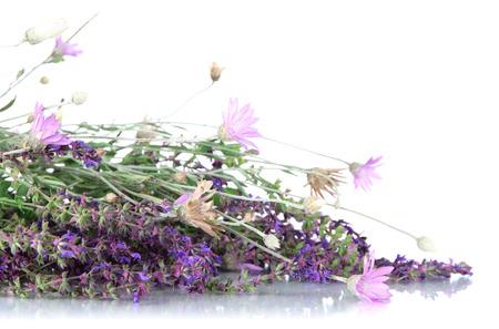Wild flowers, isolated on white Stock Photo - 22254521