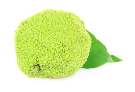hedgeapple: Osage Orange fruit (Maclura pomifera), isolated on white