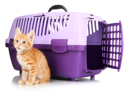 Cute little red kitten with travel plastic cage isolated on white photo