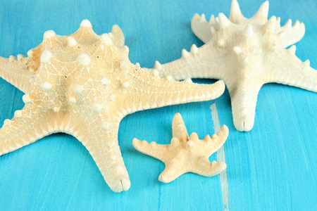 White starfishes on blue wooden table close-up photo