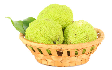 convoluted: Osage Orange fruits (Maclura pomifera) in basket, isolated on white