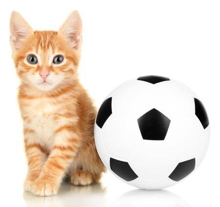 Cute little red kitten and football isolated on white photo