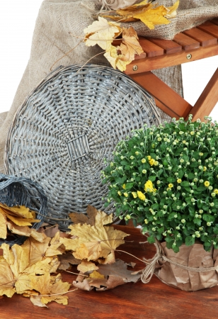 Chrysanthemum bush in pot with yellow leaves and chair close up Stock Photo - 22711440