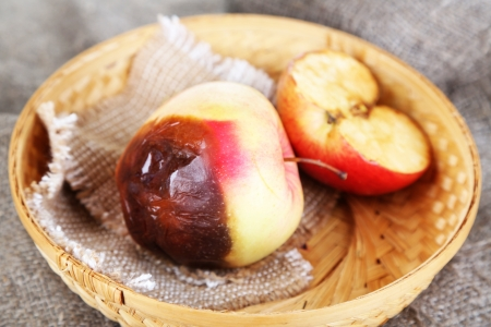 Rotten apples in basket on sackcloth photo