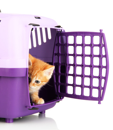 cat carrier: Cute little red kitten with travel plastic cage isolated on white