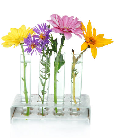 organic chemistry: Flowers in test-tubes isolated on white