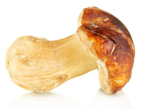 Fresh mushroom isolated on white photo