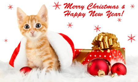 christmas pussy: Cute little red kitten in Santa hat isolated on white Stock Photo