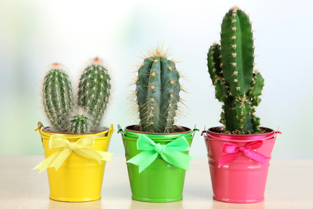 Collection of cactuses in bright pails on wooden table