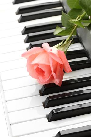 teclado de piano: fondo de teclado de piano con rosa Foto de archivo