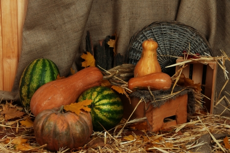 Pumpkins and watermelons with wicker stand and crates on straw on sackcloth background Stock Photo - 23737665
