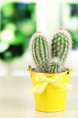 Beautiful cactus in bright pail on wooden windowsill photo