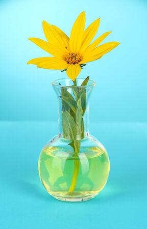 Flower in test-tube on light blue background photo
