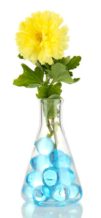 Beautiful flowers in vase with hydrogel isolated on white photo