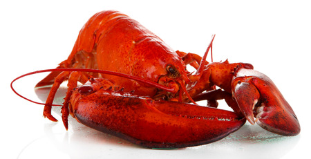 lobster tail: Red lobster isolated on white