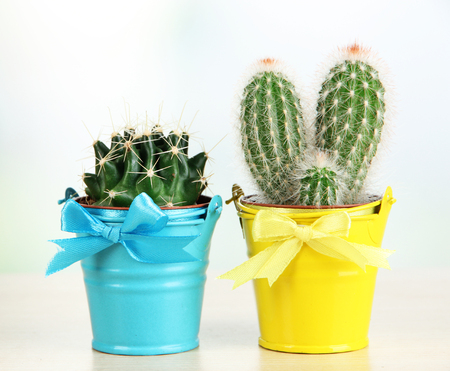 Beautiful cactuses in bright pails on wooden table