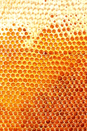 honey cell: yellow beautiful honeycomb with honey, background