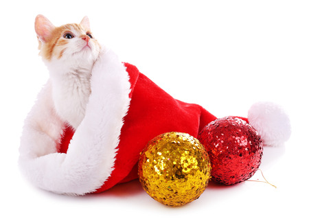 Little kitten in Christmas hat isolated on white photo
